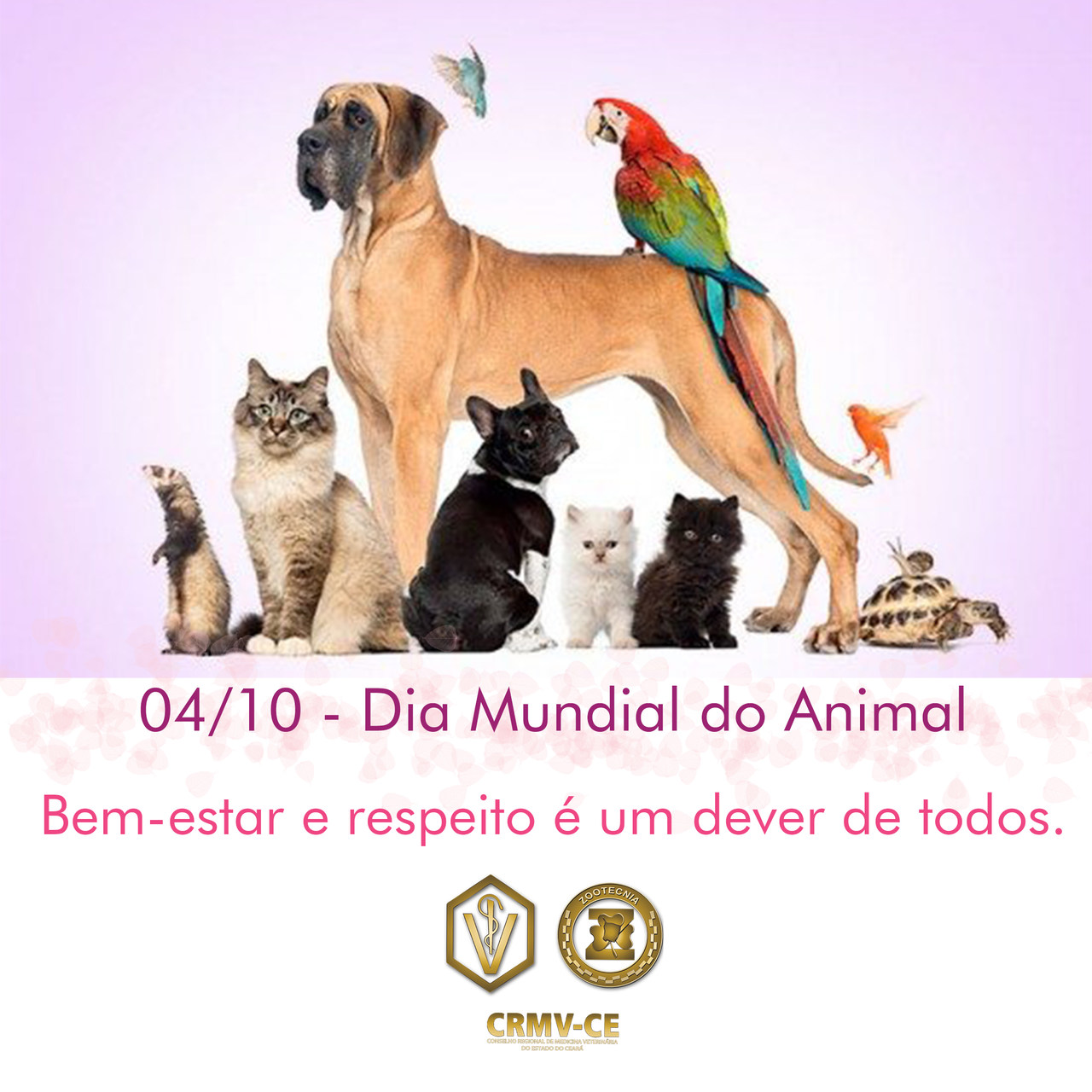 Dia Mundial do Animal.jpeg